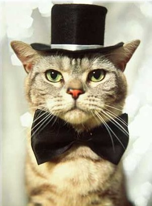 cat in hat hat images. cat in hat hat.